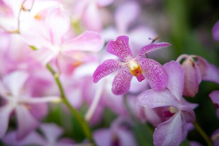 Photo for Beautiful blooming orchids in forest, On the bright sunshine - Royalty Free Image