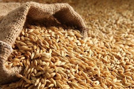 barley seed pile bag Sack
