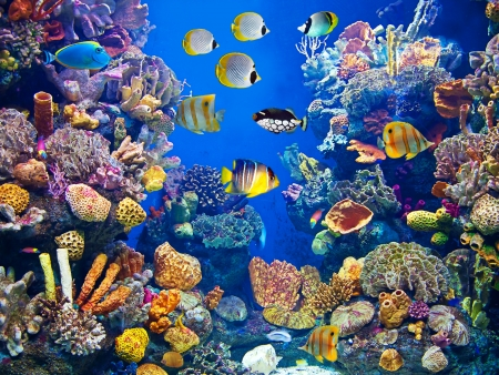 Foto de Colorful aquarium, showing different colorful fishes swimming - Imagen libre de derechos