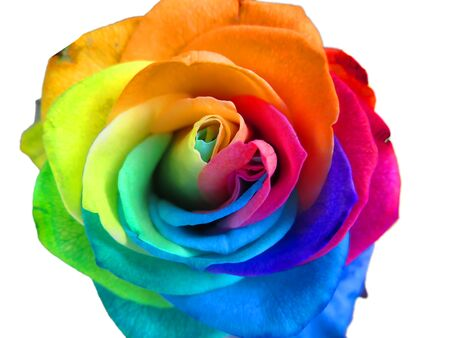 Foto de Multicolored rainbow rose - Imagen libre de derechos