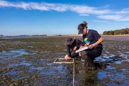 Photo for Coronet Bay, Victoria/Australia, 2020: Scientist studying distribution of seagrass at a coastal area during low tide. - Royalty Free Image