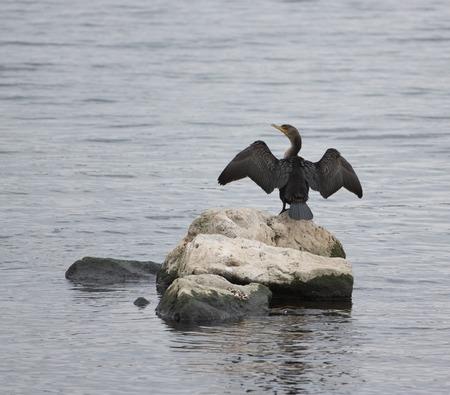 The cormorant like statue
