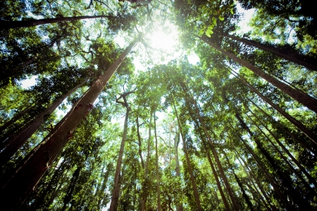 old tree in a green forest