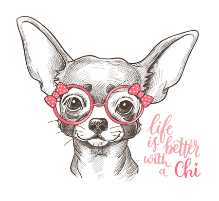 Illustration for Girl Chihuahua illustration print. Cute fashionable dog vector sketch. - Royalty Free Image