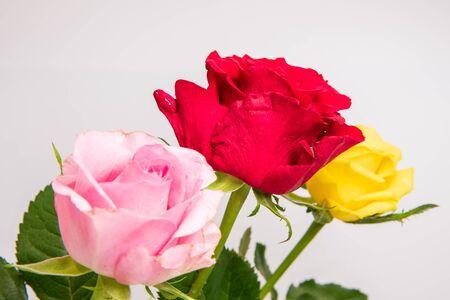 Three rosesの素材 [FY310150419722]