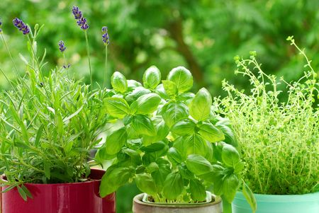 fresh herbs in pots on balcony garden