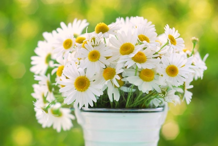 bunch of chamomile flowers on a table in the garden