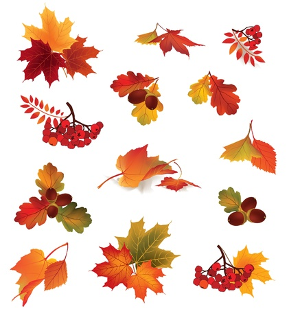 Autumn icon set  Fall leaves and berries  Nature symbol vector collection isolated on white background   Fall set