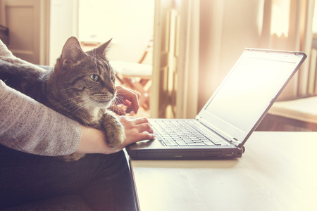 Photo pour Woman and her contented tabby cat, who is lying across her lap and arm, working on a laptop computer at home typing in data, close up view - image libre de droit