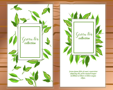 Vertical Green Tea Banner With Tea Leaves On White Background Design For Packaging Tea Shop Drink Menu Homeopathy And Health Care Products Royalty Free Vector Graphics