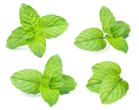 Photo pour Mint leaves isolated on white background - image libre de droit