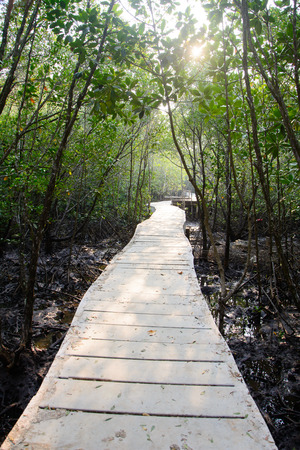 Path in Mangrove forest in Thailand