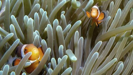 Photo pour a fish is swimming on the ground between corals - image libre de droit