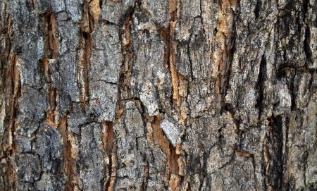 gnomon workshop wood planks and panels textures: Photos