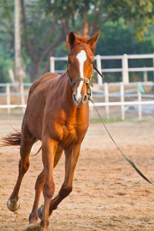horse riding in farm