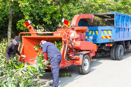 Workers loading tree branches into the wood chipper machine for shredding