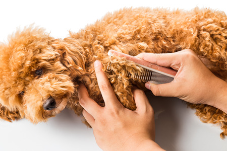 Photo pour Close up of dog fur combing and detangling during grooming - image libre de droit