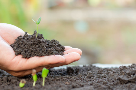 Photo pour Young plant in hand.Seedling are growing in the soil with sunlight. /Wherever the tree is planted,everyone will benefit from it. - image libre de droit