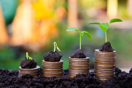 Photo pour background Growing  Money  Plant On Coins business Finance And Investment Concep - image libre de droit