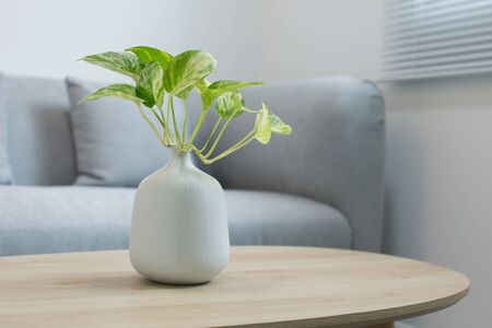 Foto de Plants in the white vase on a wooden table - Imagen libre de derechos