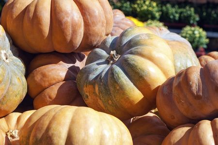 Large pumpkin for cooking and baking
