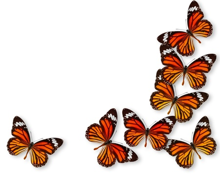 Colorful background with monarch butterfly