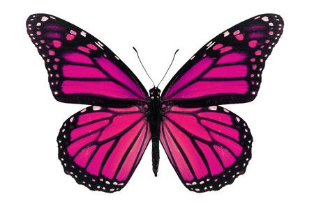 Foto de Pink monarch butterfly isolated on white background. - Imagen libre de derechos