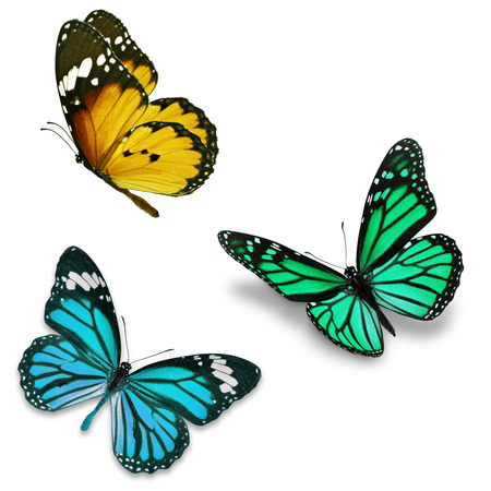 Three colorful butterfly, isolated on white background