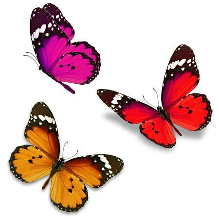 Three colorful butterfly isolated on white background