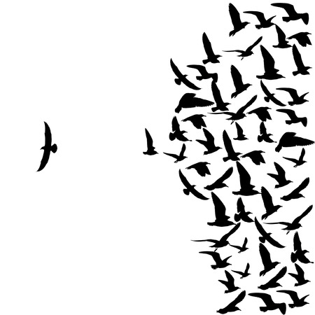 silhouette group of flying seagull birds with one individual bird going in the opposite direction white background.