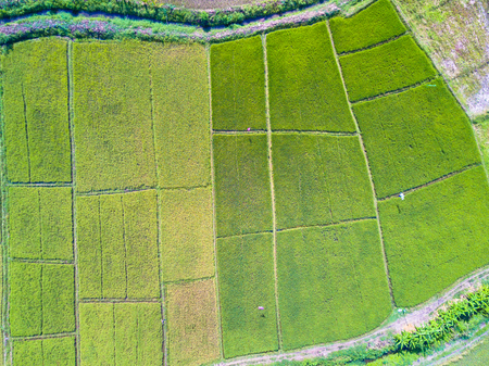 Photo pour Aerial top view photo from flying drone of green rice fields in countryside Land with grown plants of paddy - image libre de droit