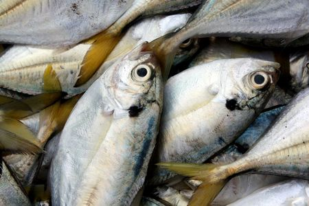 A background of freshly caught fish with yellow fin.