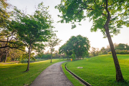 Beautiful avenue in to the park, path way
