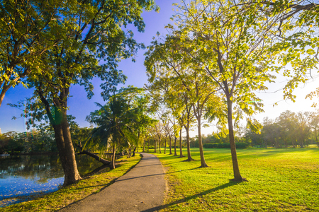 Foto de Pavement in park with green lawn sun light, Stone Pathway in a Green Park - Imagen libre de derechos
