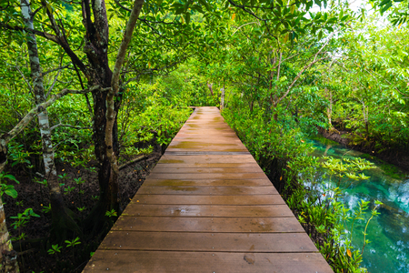 Long wood pathway in Mangrove forest, mangrove rain forest.