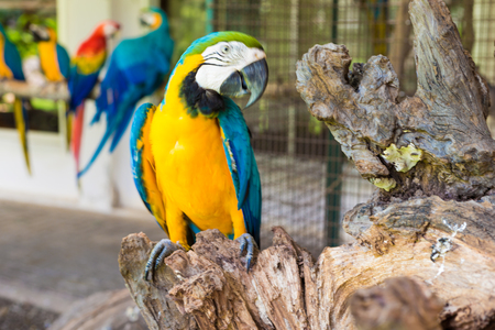 Parrot bird Amazon yellow blue macaw on branch