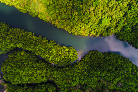 Photo pour Aerial view of mangrove tropical rainforest with river from mountain to sea, Nature life - image libre de droit
