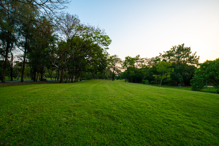 Photo for Beautiful green field with tree in city park sunset landscape - Royalty Free Image