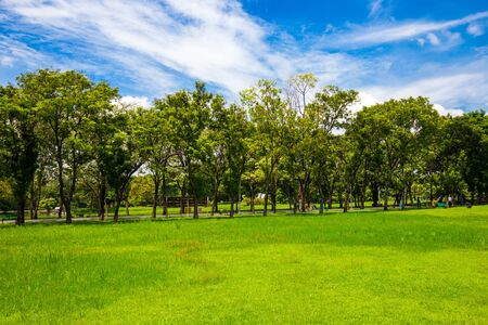 Photo for Idyllic nature green meadow with tree in city public park, Nature landscape - Royalty Free Image