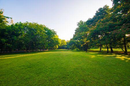 Foto de Sunset park green lawn with tree city public park - Imagen libre de derechos