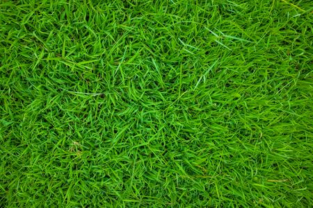 Foto de Green grass nature texture botanical garden, Fresh grass - Imagen libre de derechos