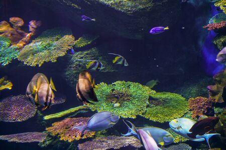 Photo pour Colorful coral reef and sea fish underwater, Sea life - image libre de droit