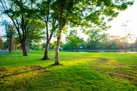 Foto de Green tree in city park with meadow grass sundet sky nature landscape - Imagen libre de derechos