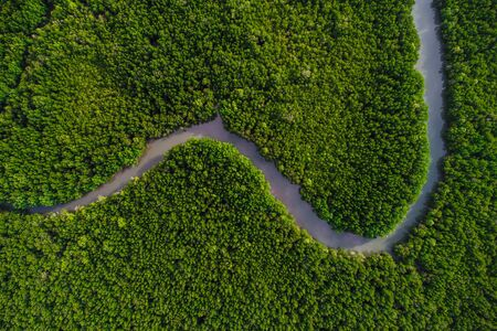 Photo for Green mangrove forest sea bay sunrise ecology nature system aerial view - Royalty Free Image