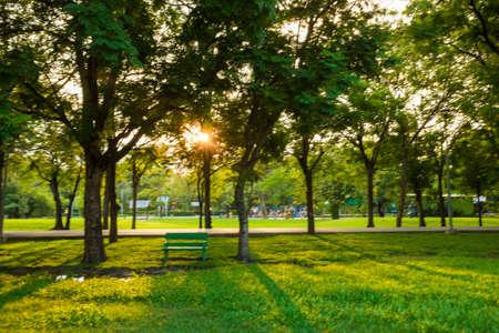 Foto de Green grass public park evening sunset recreation place - Imagen libre de derechos