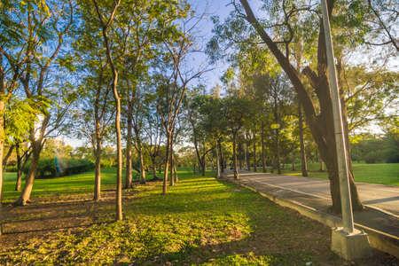 Foto de Green tree park sunset foliage meadow with blue sky cloud nature landscape - Imagen libre de derechos