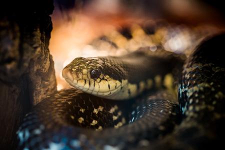 Beautiful snake showcase in the zoo.