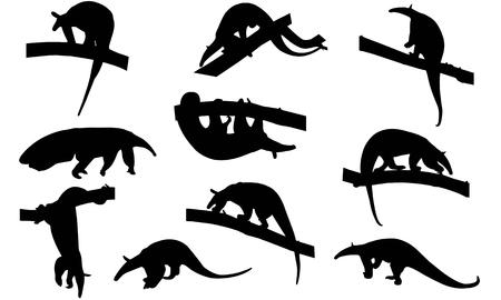 Illustration pour Anteater   silhouette vector illustration - image libre de droit