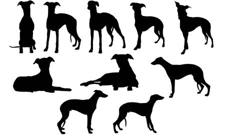 Illustration pour Whippet silhouette illustration - image libre de droit