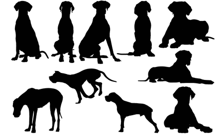 Illustration for Great Dane Dog silhouette illustration - Royalty Free Image